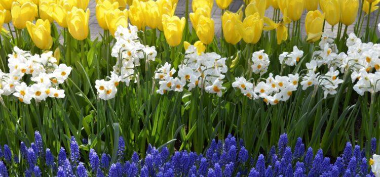 Мы все ждем весну